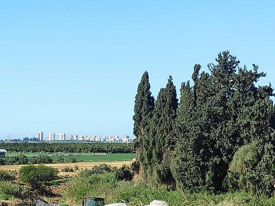 Gedera, Izrael: נוף באזור בסוף החורף