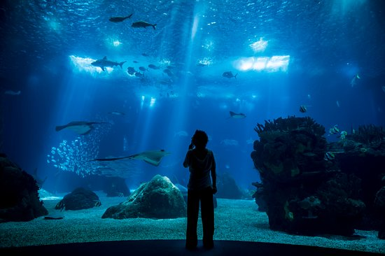 The huge Lisbon aquarium