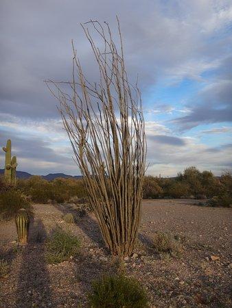 Some kind of desert plant