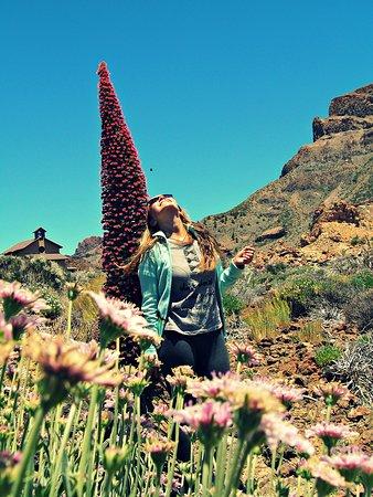 Numerosas flores y el imponente tajinaste
