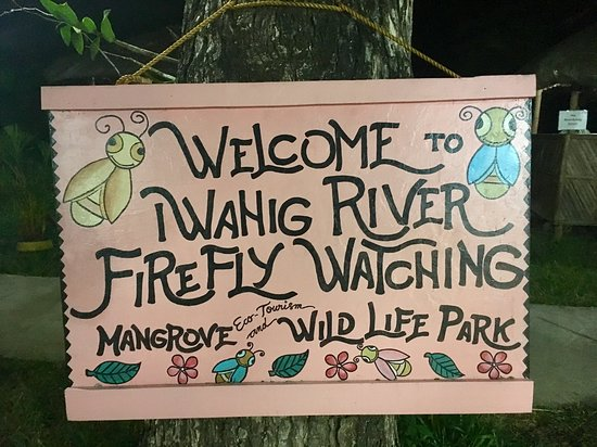 Puerto Princesa attractions - Firefly watching experience