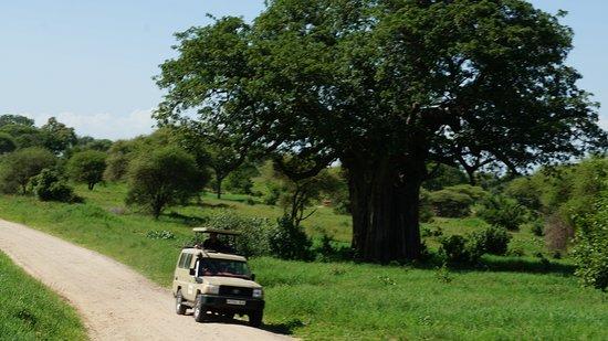 Tanga Wonders Adventures Tours & Safaris