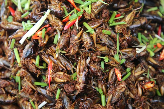 Skun, Kambodscha: Other insects are available