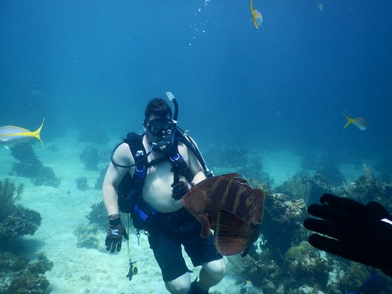 Hope Town, Elbow Cay: diving with nassau grouper