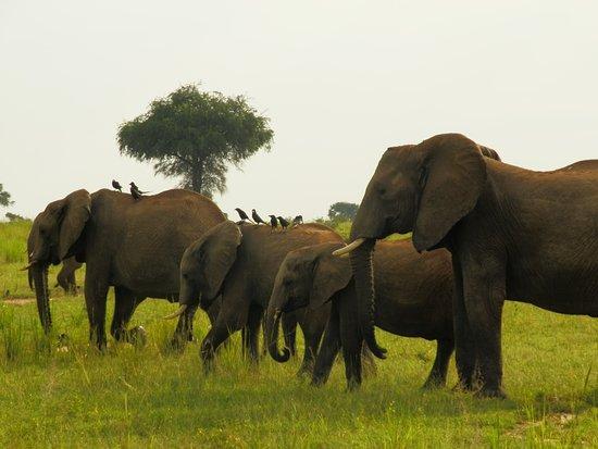 Always Sunday Safaris: Gamedrive