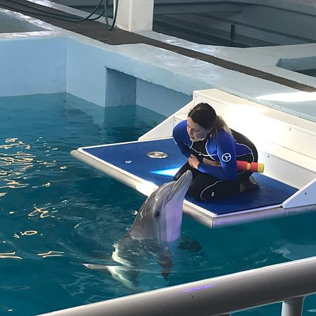 Clearwater Marine Aquarium - 2019 All You Need to Know ...