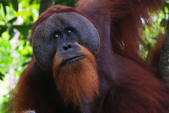 Tour and Travel In Sumatra