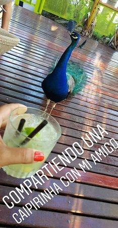 compartiendo un trago con el pavo real