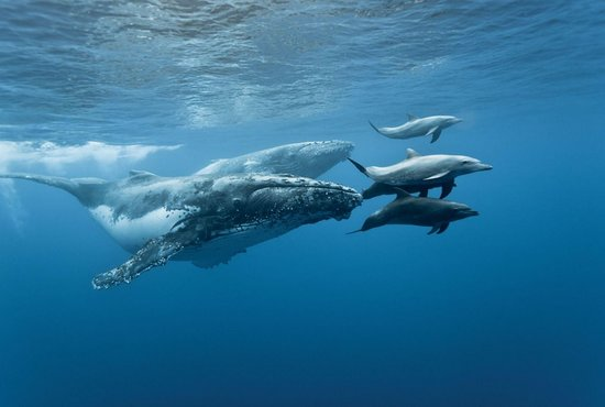 Baja's Awesome Whales & Dolphins