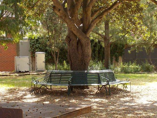 เซนต์กิลดา, ออสเตรเลีย: Seating around tree