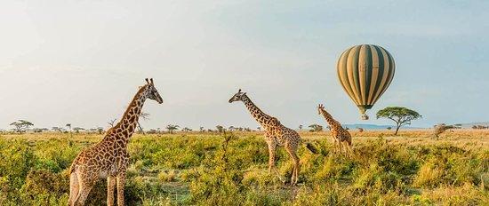 Giraffe and Balloon