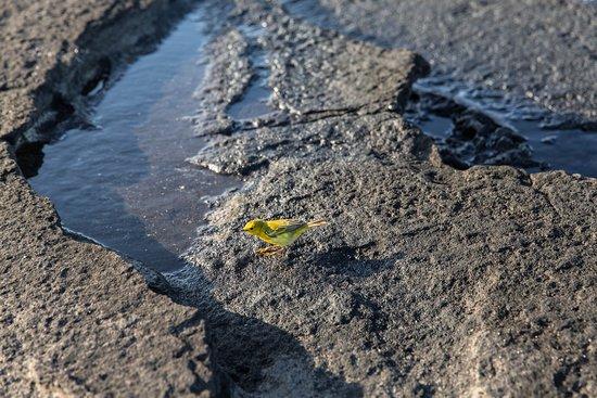 National Geographic Islander: Wildlife at Santiago Island (Puerto Egas) Port