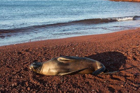 National Geographic Islander: Wildlife at Rabida Island Port
