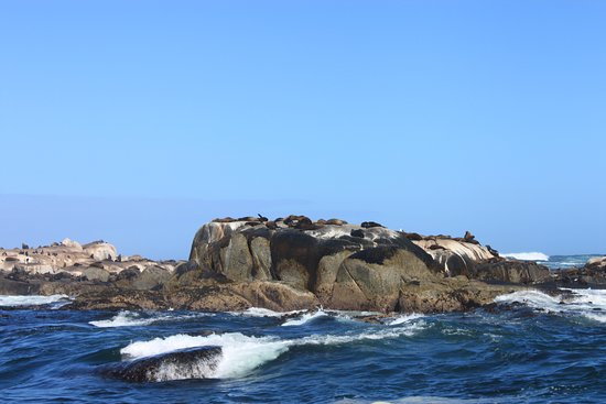 Full-Day Cape Point & Cape Peninsula Sightseeing Tour from Cape Town: Seal island