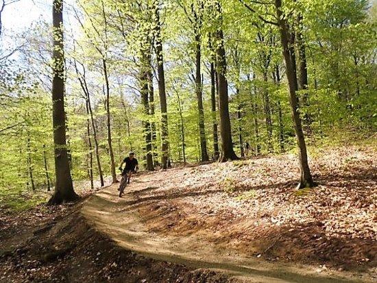 Horsens, Dinamarca: Bjerre mtb spor