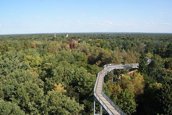 Beelitz, Tyskland: Baumkronenpfad im Herbst