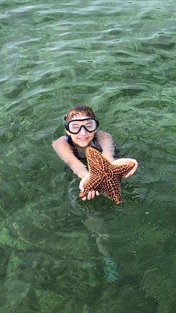 4 Point Starfish (Unusual Find)