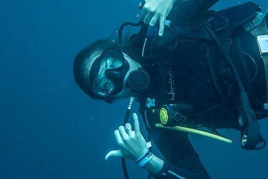 Half-Day Two Tank SCUBA Diving in Bocas del Toro, Panama