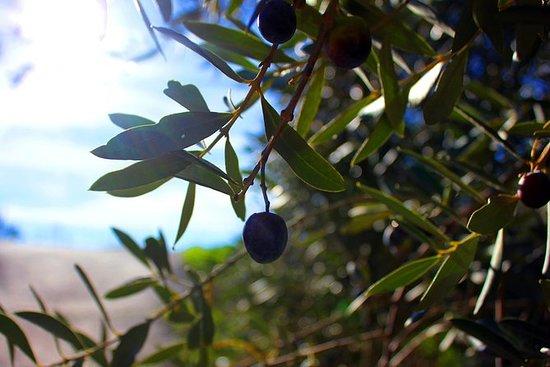 橄榄油和山脉路线 - 包括小团体,油品和午餐