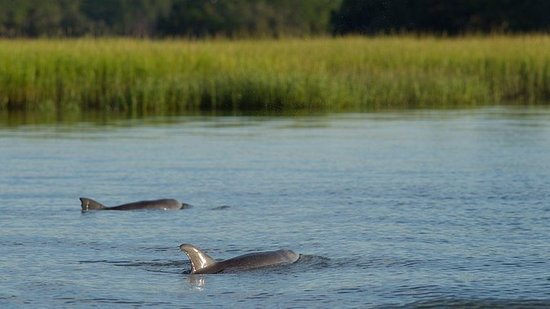 90-minute Dolphin and Nature Tour