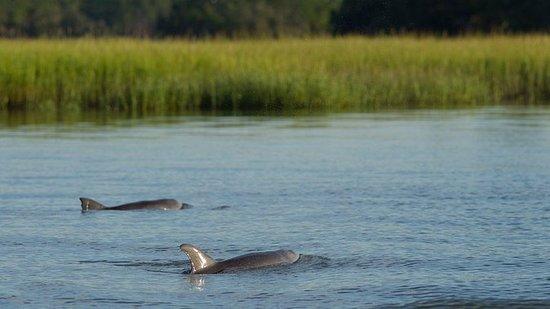 90分钟的海豚和自然之旅