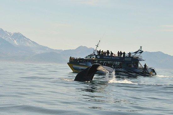 基督城凯库拉鲸鱼观赏一日游,包括沿海太平洋火车