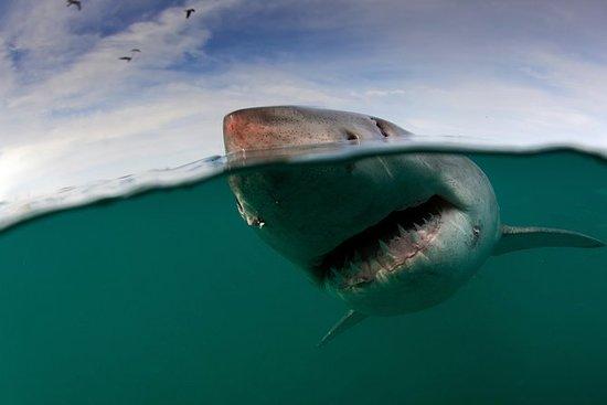 Shark Cage Diving Ciudad del Cabo