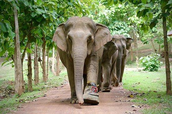 Ethical Elephant Jungle Sanctuary...