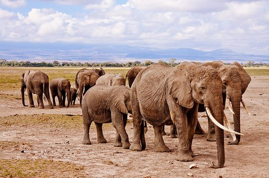 6 jours de safari au Kenya
