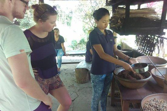 Bali Coffee Tour avec test du café