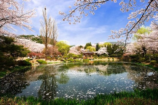 3 days Private tour Busan & Gyeongju...