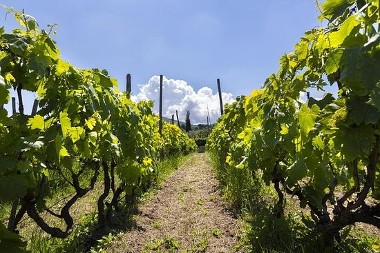 Frascati Wine Tour Experience with