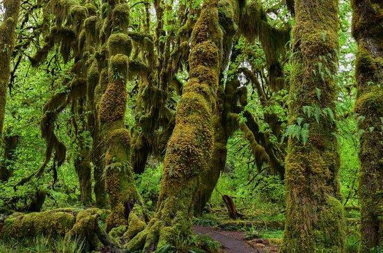 Hoh Rain Forest & Pacific Coast...