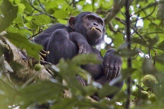 2 jours de safari dans la forêt de...