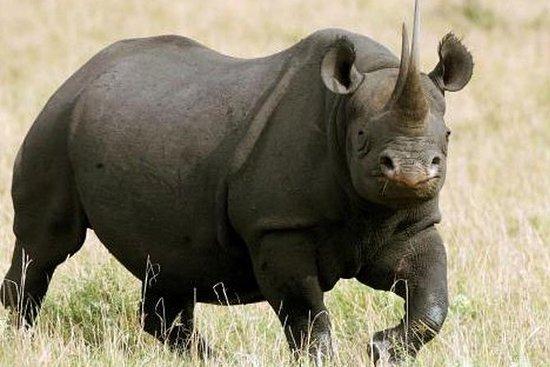 Private Nature Lover Vegan Safari 7...