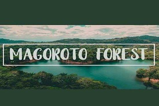 Magoroto Forest Estateへの日帰り旅行 - タンガ市から
