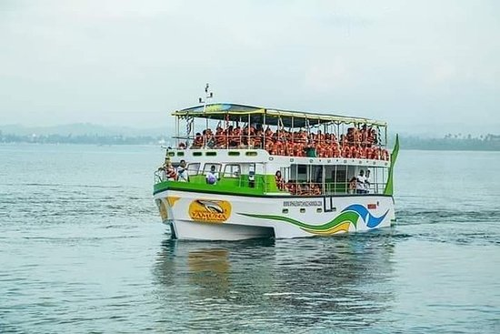 Whale Watching Luxury Boat Tour in...