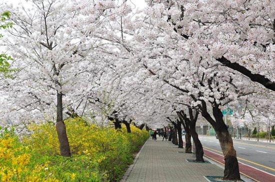 Spring 3 days Seoul & Mt Seorak...