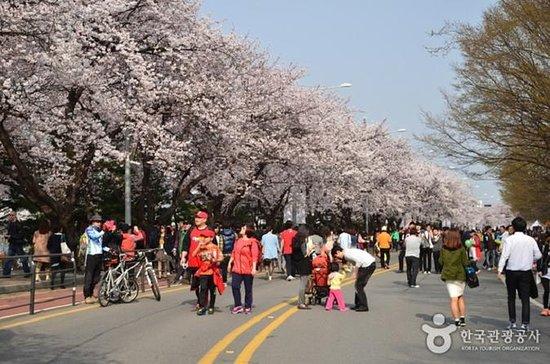 Spring 4 days Seoul&Mt Seorak Cherry...