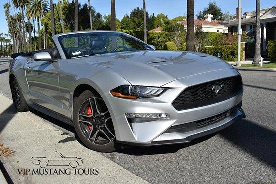 Premium VIP Mustang Tour (3 hours)