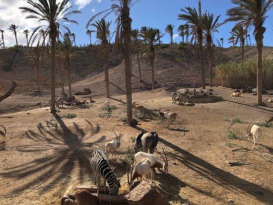 Oasis Park Fuerteventura