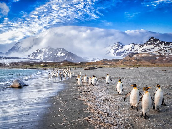 "Islas Malvinas: Make your march along the United Kingdom's Falkland Islands, the ""Penguin Capital of the World"" and the nesting grounds to over 1 million beautiful birds."