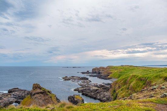 Excursion à Phillip Island au départ...