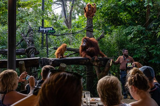 Singapore Zoo with Transfer and...