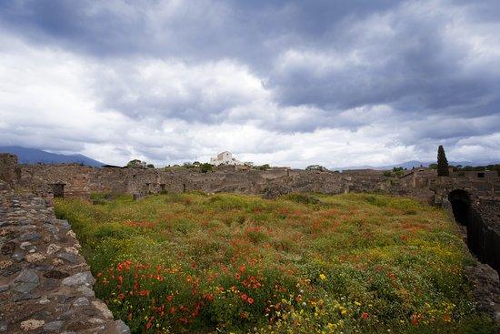 Dagstur til Pompeii og Vesuv fra Roma