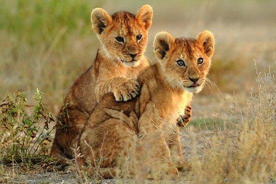 Safari Kruger Explorer de 3 jours...
