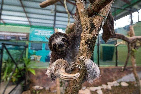 巴拿马城的Gamboa雨林组合包