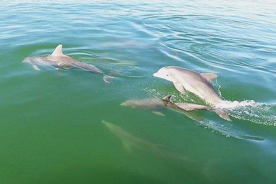海豚手表巡航与浮潜壳牌钥匙