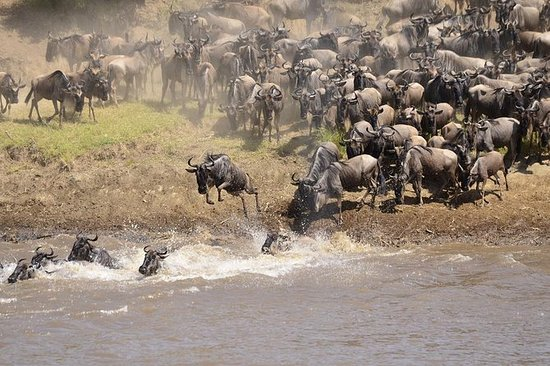 Safari Maasai Mara de 3 días en Sopa...