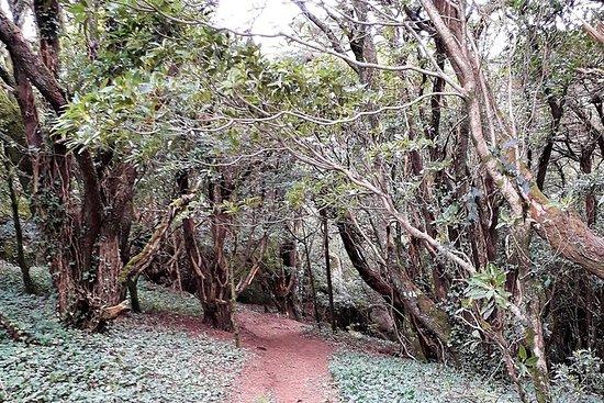 Vandring i Sintra-Cascais naturpark